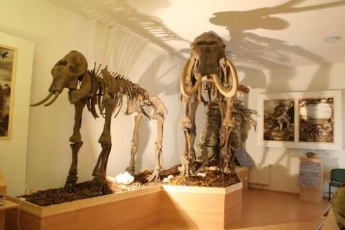 Bakonyi természettudományi Múzeum Jégkorszak